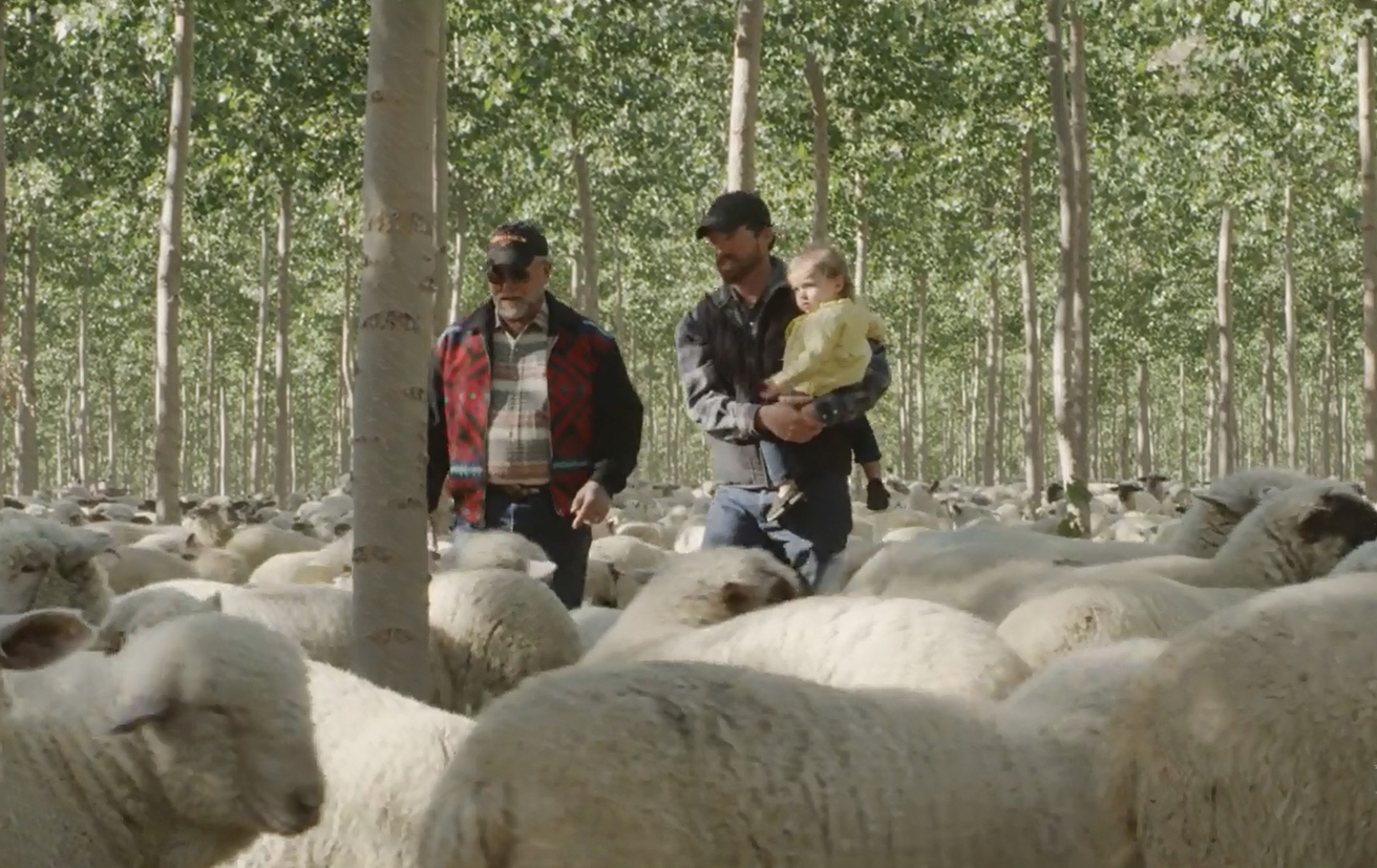 Two men (Cameron Krebs and his father) stand in a flock of sheep. The younger man is holding his toddler-aged daughter in his arms.