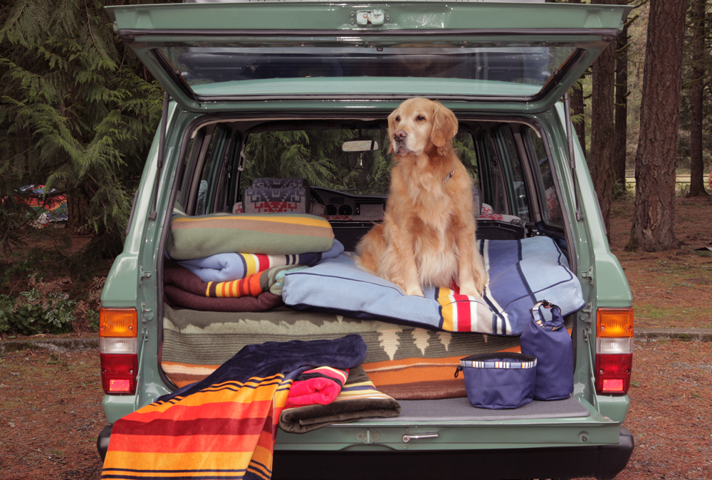 A Golden Retirever sits in the back of a rig with pendleton Pet products