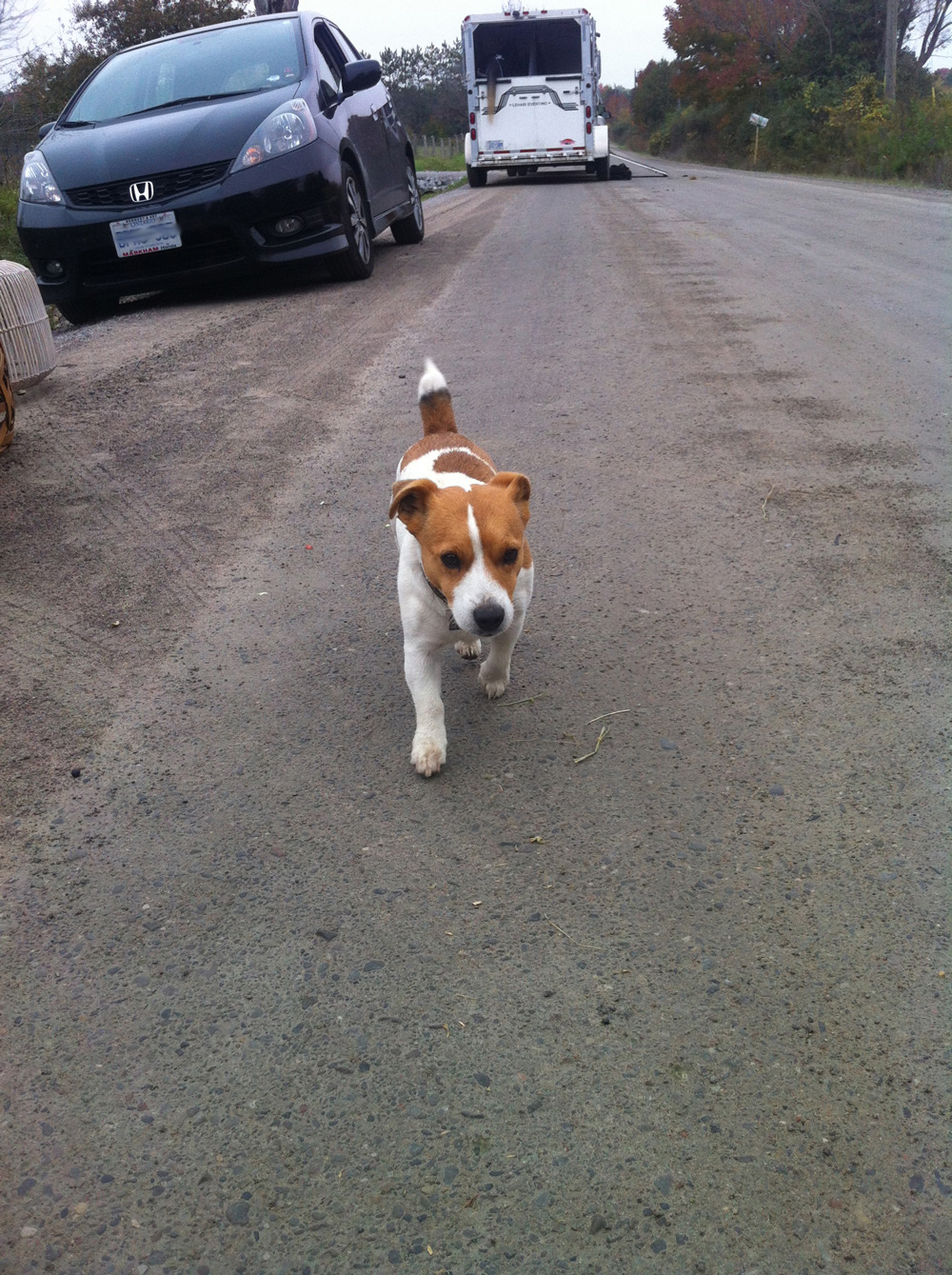 Jack Russell heads down the road.