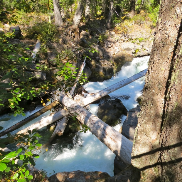 rogue headwaters