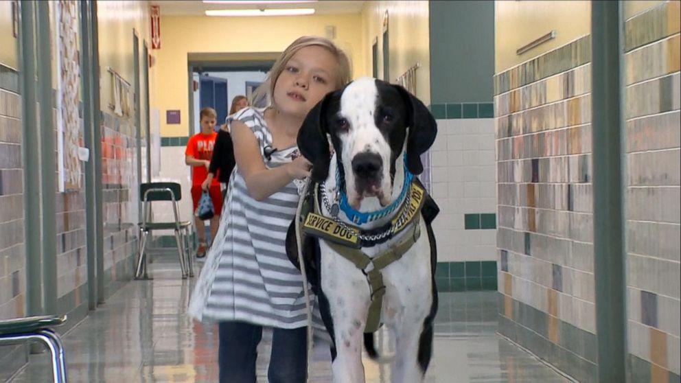 A girla dn her Great Dane dog in a school hallway