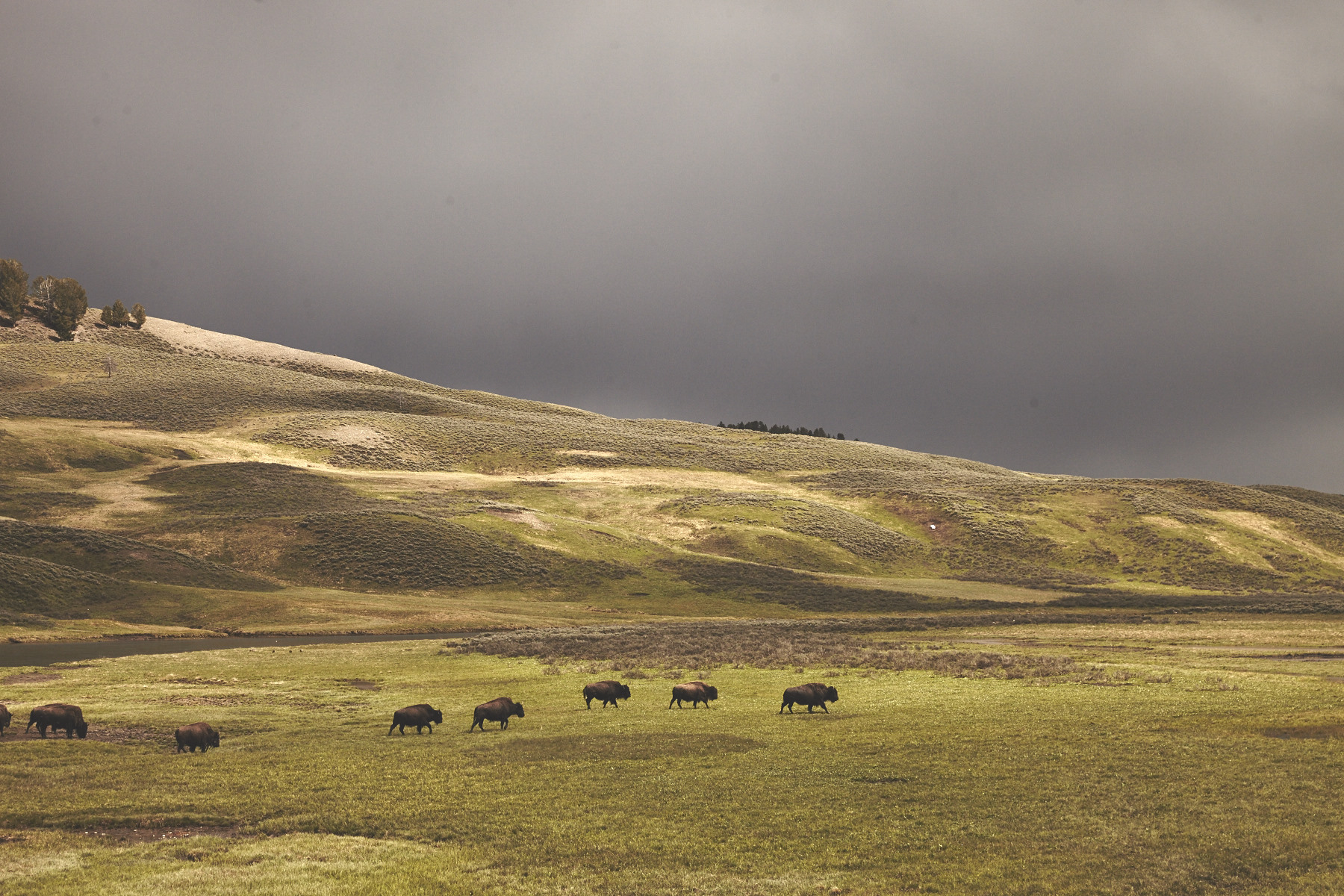 OurFreeWays_ Clouds gathering over a small herd of bison