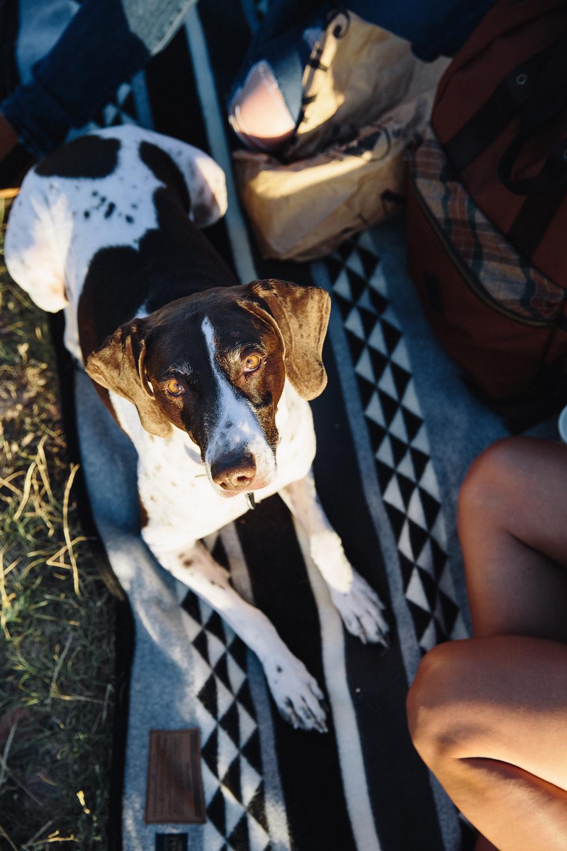 Kate_Rolston photo of a sunlit dog on a custom Pendleton blanket for Yosemite National Park