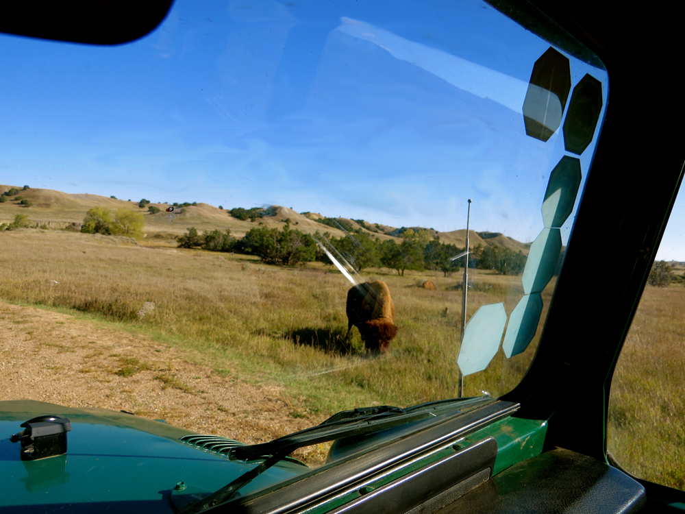 Bison through the rig's window