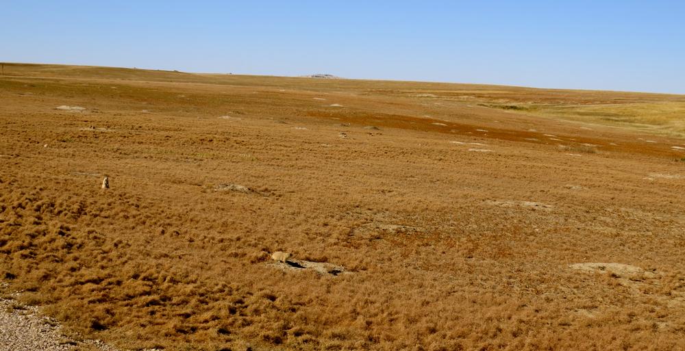 Prairie with prairie dogs