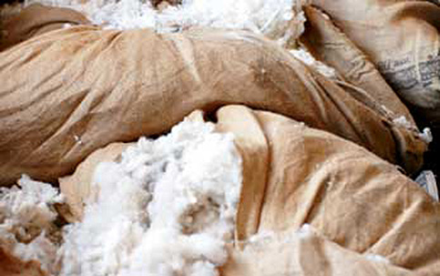bags of scoured, undyed wool fleece