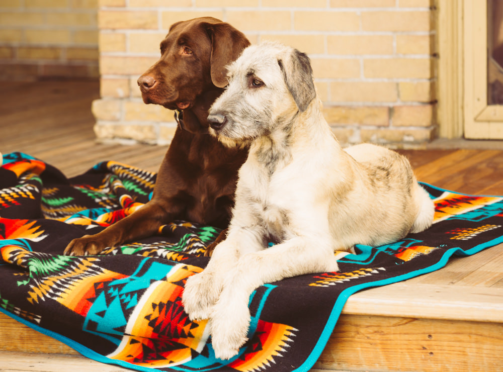 Brandon-Burk-Photography: two dogs pose on a Chief Joseph blanket.