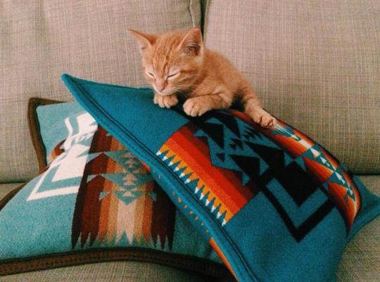 A small orange kitten sleeps on a pile of Pendleton Chief Joseph pillows.