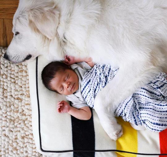 A Gret Pyrenees dog keeps her baby very safe on her Pendleton dog bed.
