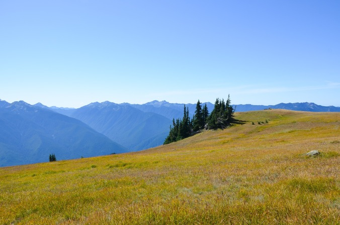 Hurricane_Ridge