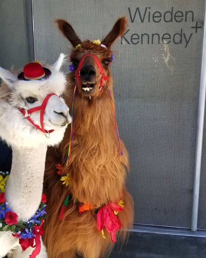An alpaca and a lama pose outside the office doors of Wieden+Kennedy.