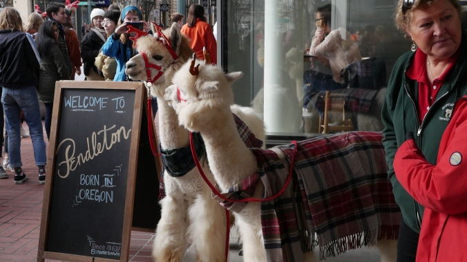 Two alpacas standin front of a store, both are draped with Pendleton plaid throws.