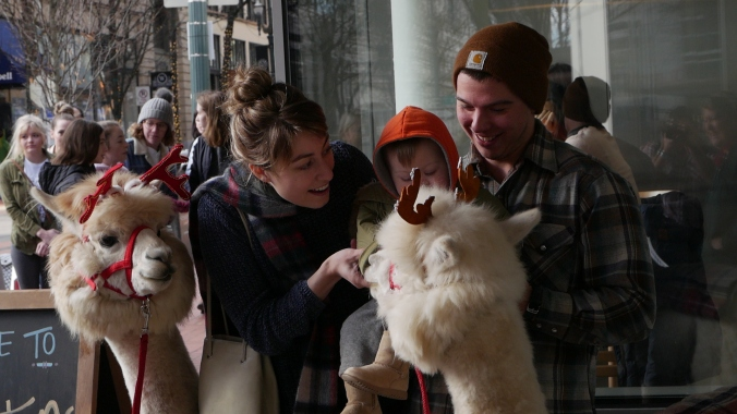 A man and a woman with a toddler interact with alpacas.