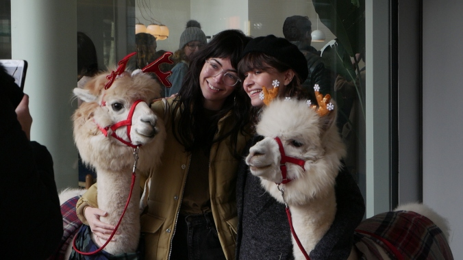 Two young women take a photo with the two alpacas.